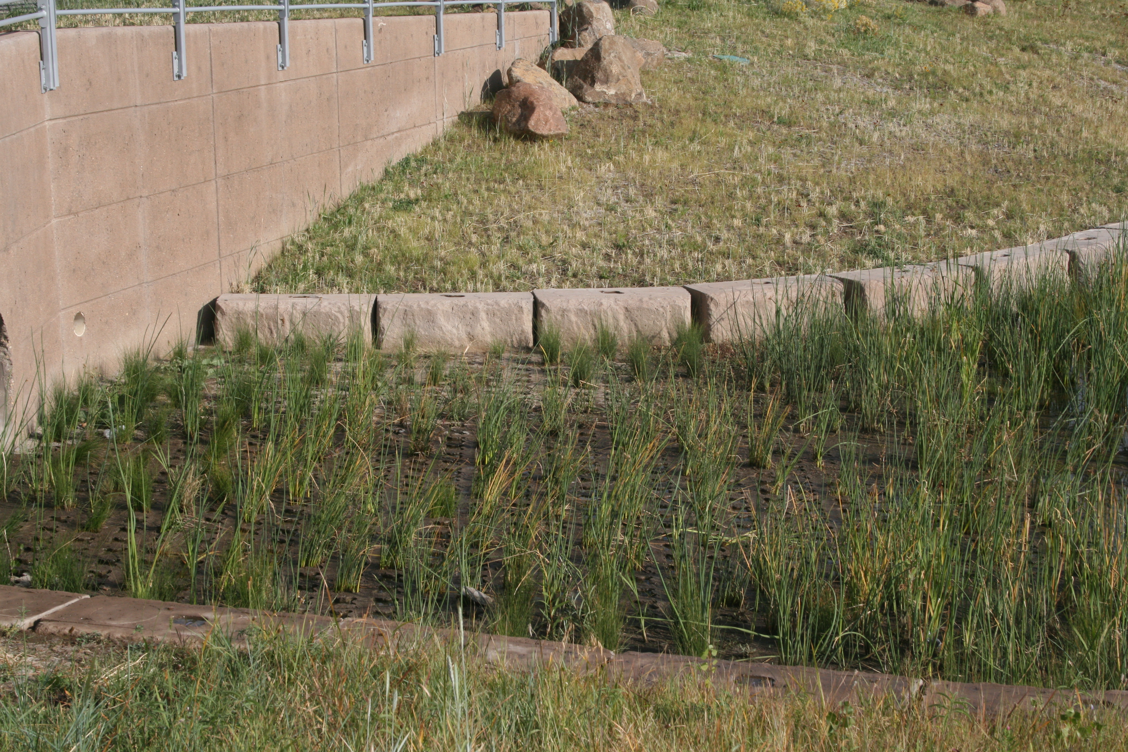 Grasscrete - NREL Detention Pond - 08