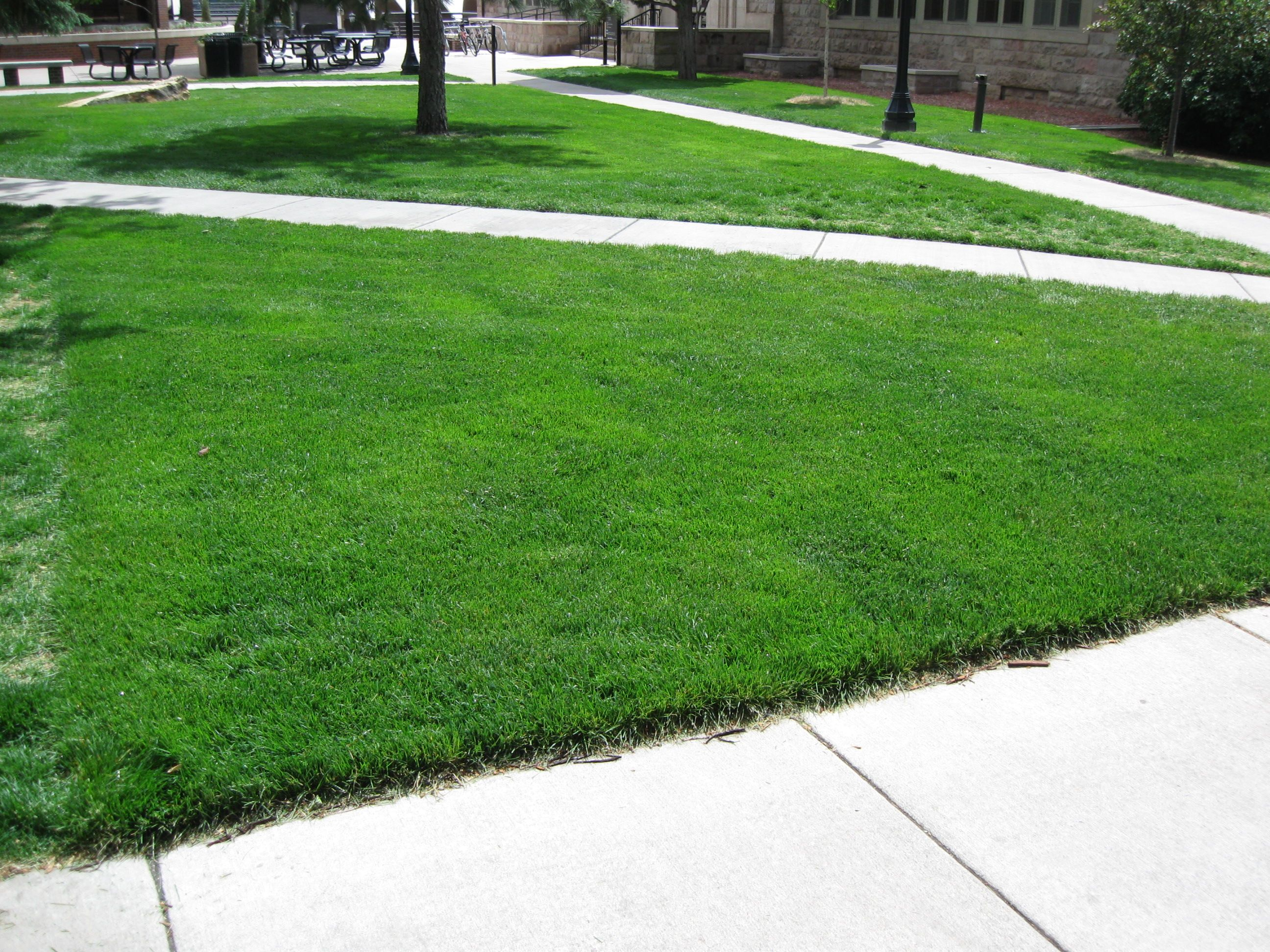 Grasscrete - Colorado College - 01