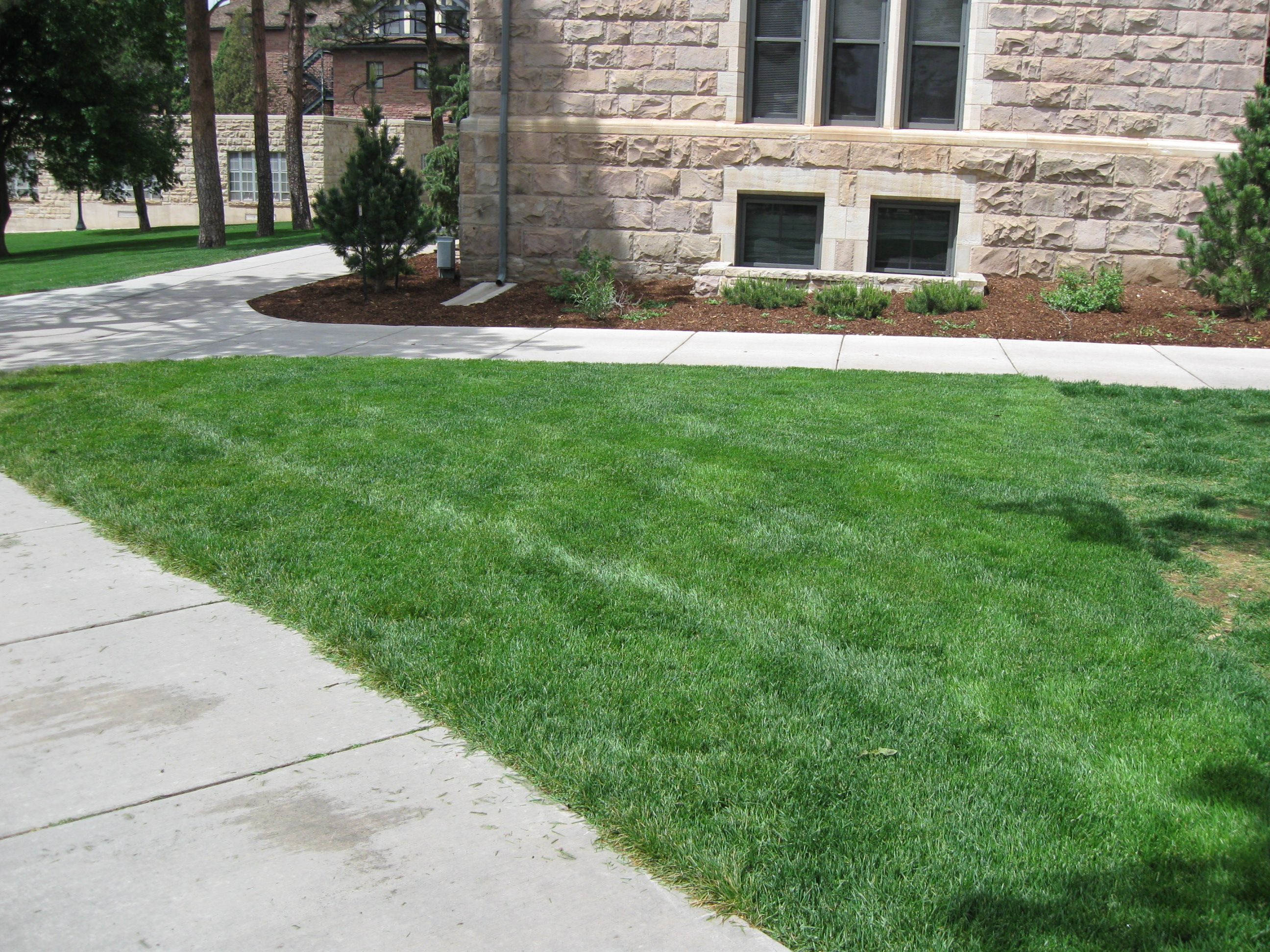 Grasscrete - Colorado College - 02